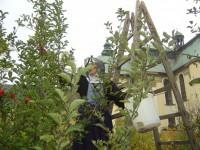 Praca w sadzie